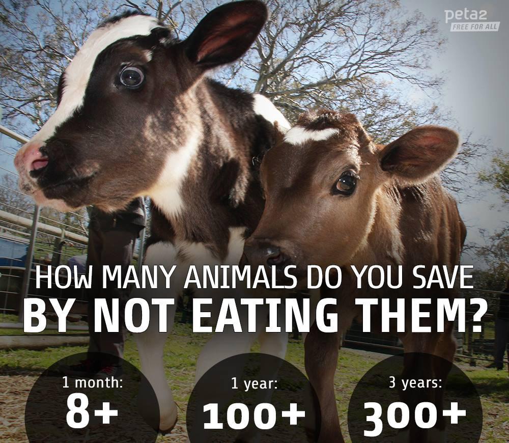 Сколько животных можно спасти, отказавшись от мяса